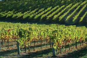 Accountant in the Adelaide Hills